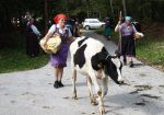 We were at Cows' Ball in Bohinj